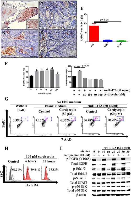 Both CMP and cordycepin inhibit IL-17A effects.