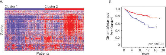 Estrous cycle gene signature correlates with human breast cancer metastasis-free survival.