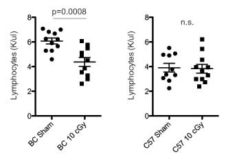 Low dose radiation exposure decreases blood lymphocyte counts in BALB/c.
