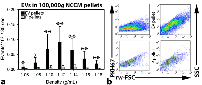 Quantitative extracellular vesicle (EV) analysis by high-resolution flow cytometry of notochordal cell-conditioned medium (NCCM).