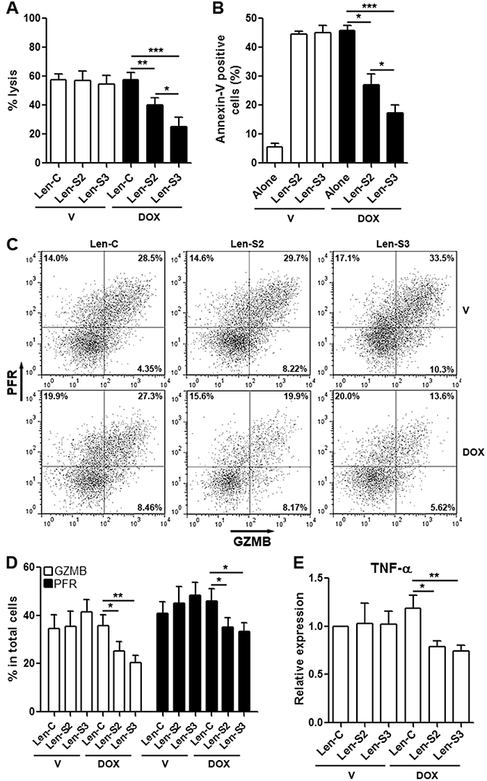 SESN2 and SESN3 expression suppresses NK-92 cell cytotoxic activity in vitro.
