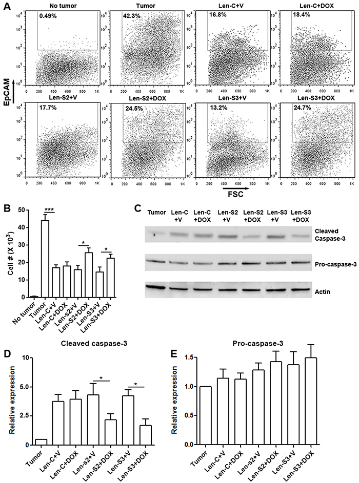 SESN2 and SESN3 suppresses NK-92 cell-mediated anti-ovarian cancer response in vivo.
