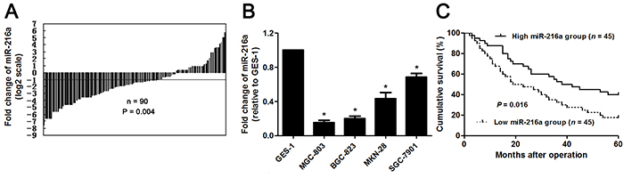 The expression and prognostic value of miR-216a in GC.