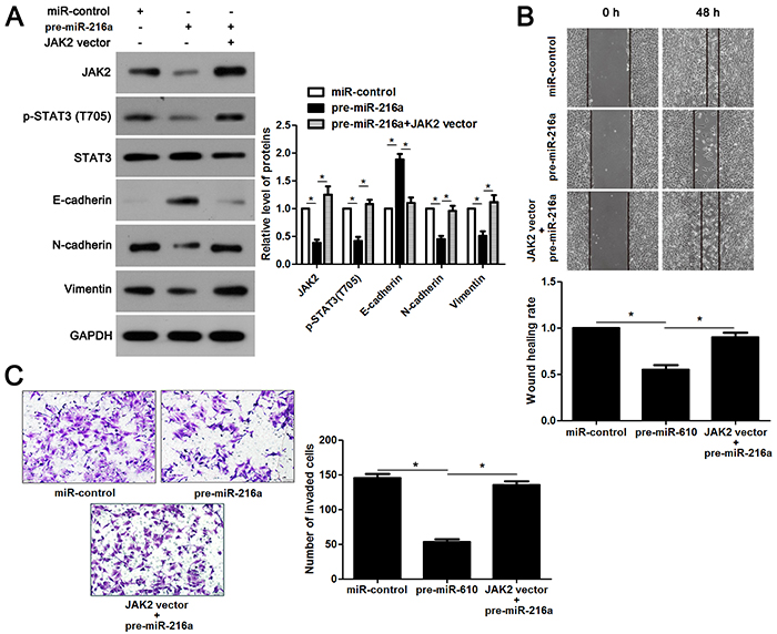 JAK2/STAT3 functions in miR-216a inhibited EMT process and metastasis of GC cells.