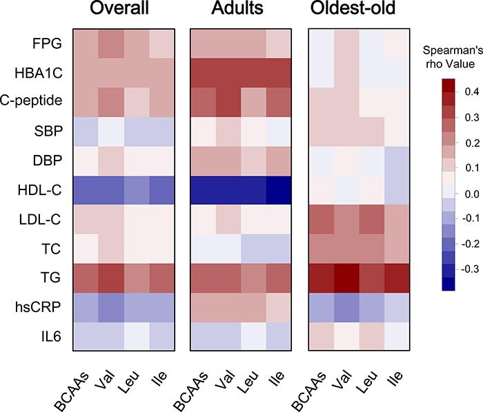 Correlation heatmap illustrating the relationship between circulating BCAAs and cardiometabolic quantitative phenotypes.