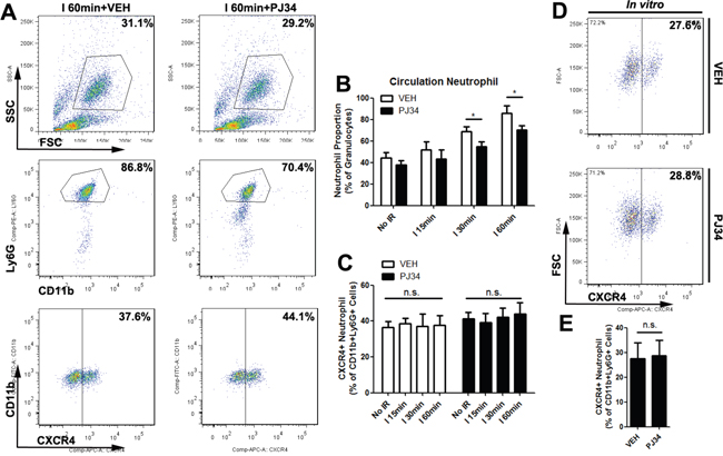 PARP-1 had no influence on the polarization of neutrophils outside of mice liver milieus.