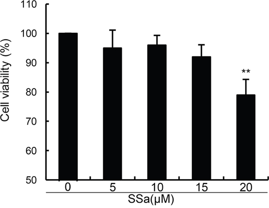 Effects of SSa on the cell viability of chondrocytes.