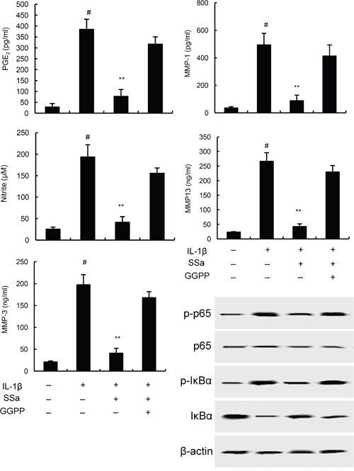 Effects of LXRα inhibitor GGPP (20 μM) on the anti-inflammatory effects of SSa.