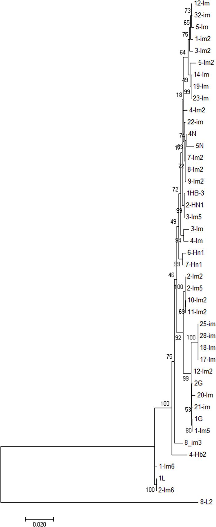 Phylogenetic analysis ESBL-producing E. coli isolates (n = 43) from bovine mastitis.