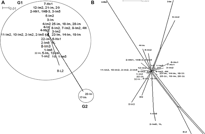 Split network analysis of all seven multi-locus sequence typing allelic loci concatenated sequences of 43 ST.