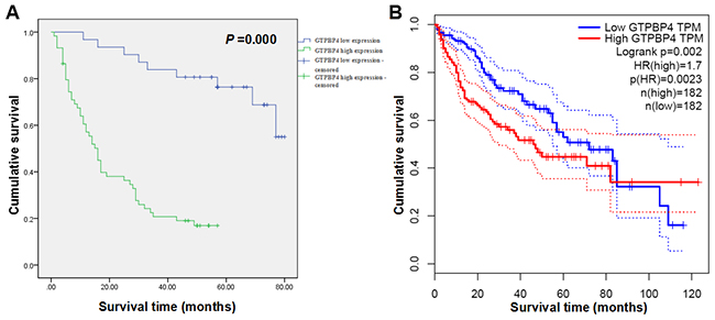 High expression levels of GTPBP4 protein and mRNA remarkably predicted the poor overall survival time of HCC patients in Kaplan-Meier survival analysis.