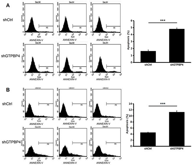 Knockdown of GTPBP4 increased cell apoptosis in SMMC-7721 and HepG2.