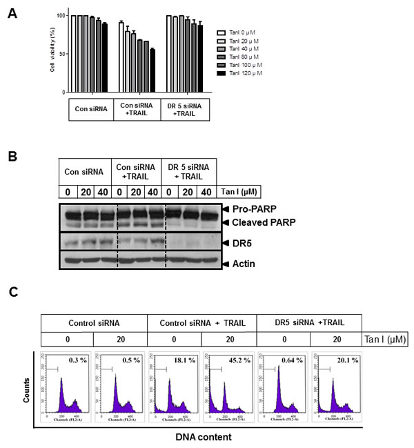 Fig 4: Silencing of DR 5 suppresses cell death induced by Tanshinone I and TRAIL in PC-3 cells.