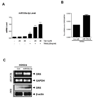 Fig 5: Overexpression of miR135a-3p enhanced sub G1 accumulation and DR5 upregulation at mRNA and protein levels in PC-3 cells.