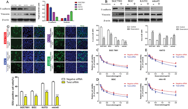 The EMT mediates DOX resistance in GC cell lines.
