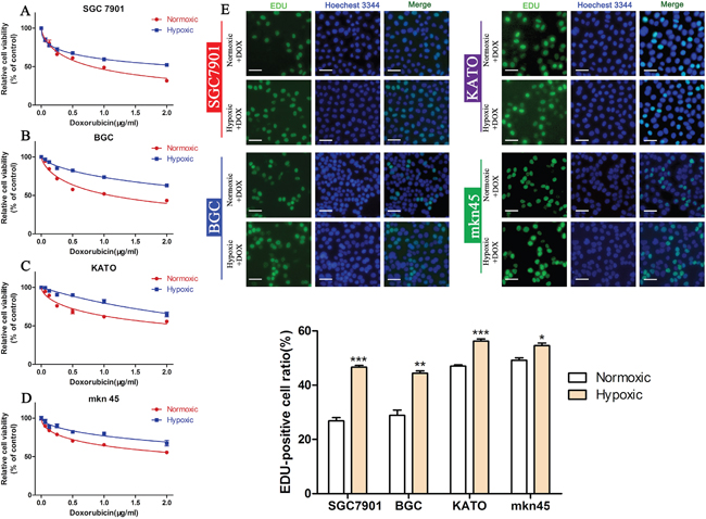 Hypoxia induces DOX resistance in GC cell lines.