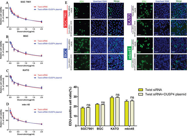 Blocking the EMT attenuates the ability of DUSP4 overexpression to induce DOX resistance.