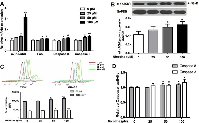 Effects of nicotine (0 to 100 μM) treatment for 48 h on expression of α7 nAChR and expression of Fas apoptotic pathway in primary thymocytes.