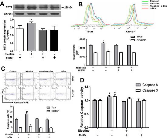 Effects of 50 μM nicotine treatment with or without α-bungarotoxin (α-Btx, 1μg) pretreatment on thymocyte apoptosis and expression of TET2 and Fas apoptotic pathway in primary thymocytes.