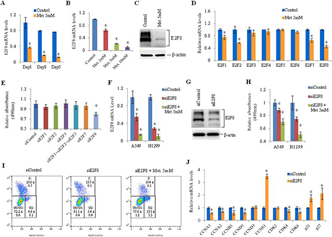 Effect of metformin on E2F8 expression and effect of E2F8 knockdown on proliferation of lung cancer cells.