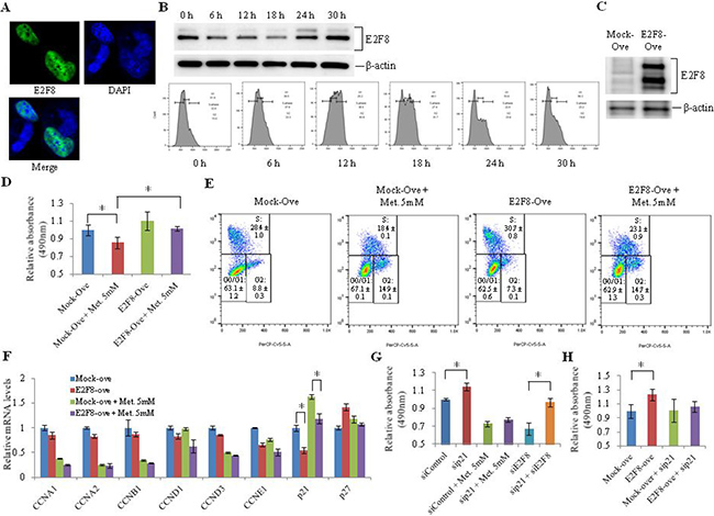Effect of E2F8 overexpression on proliferation of lung cancer cells.