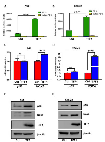 TFF1 increases p53 transcriptional activity and protein expression in gastric cancer cells.