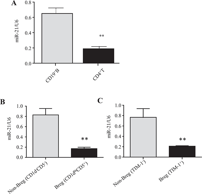 IL-10-producing Breg cells exhibit lower miR-21 expression than non-Breg cells.