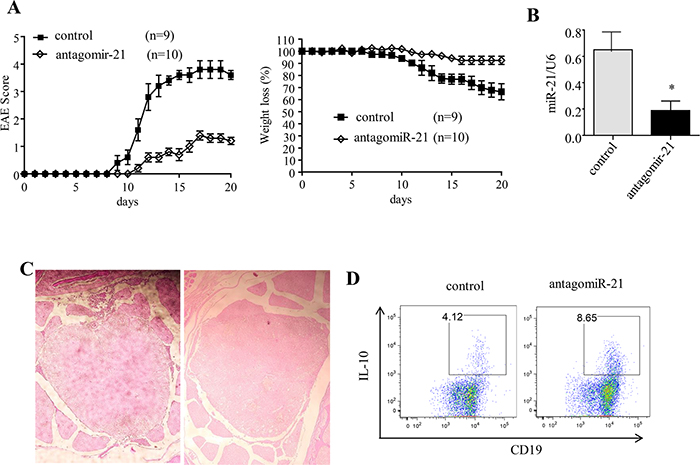 Silencing of miR-21 ameliorates the clinical severity of EAE.