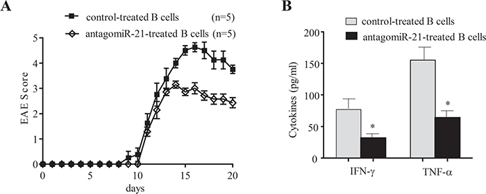 Transfer of miR-21-silenced B cells ameliorates the clinical severity of EAE and inhibits pro-inflammatory cytokine expression.