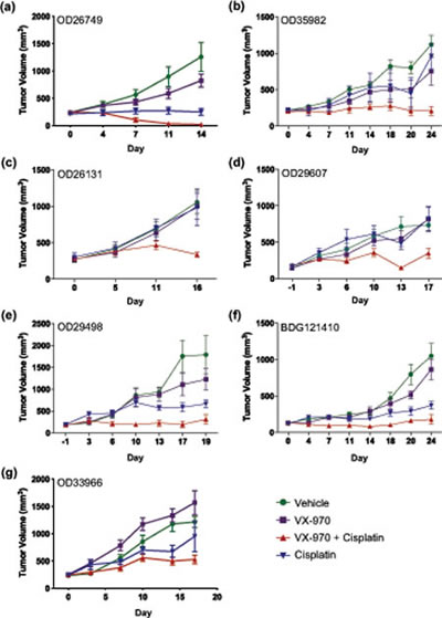 VX-970 enhances the therapeutic efficacy of cisplatin in patient-derived lung tumor xenografts.