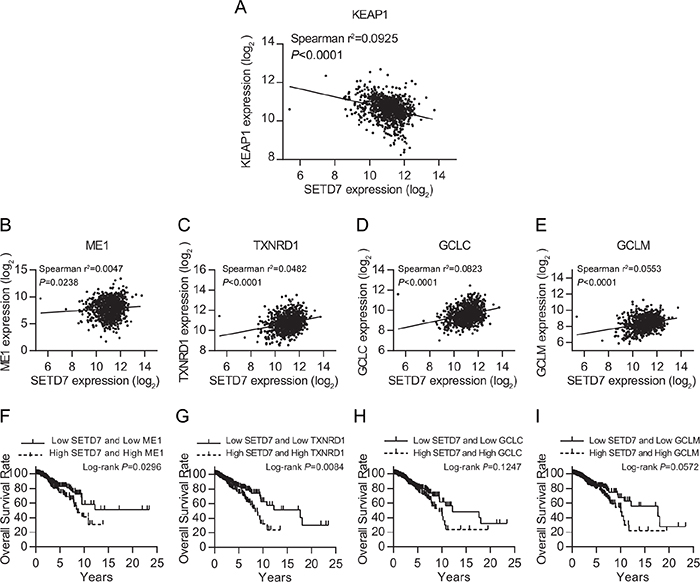 SETD7 is tightly correlated with KEAP1-NRF2 pathway.