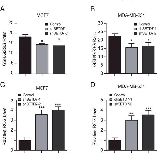 SETD7 maintains intracellular redox status.