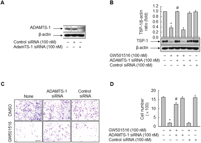 Activating PPARδ inhibits cells migration and TSP-1 expression in MDA-MB-231 cells via ADAMTS1.