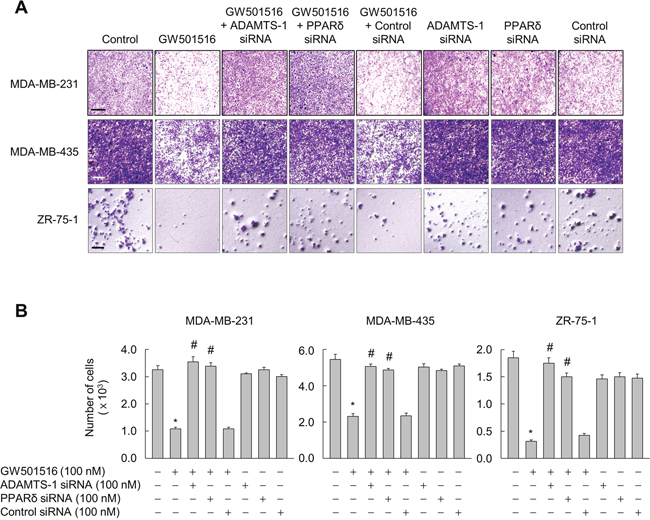 Activating PPARδ suppresses invasion of MDA-MB-231, MDA-MB-435, and ZR-75-1 cells via ADAMTS1.