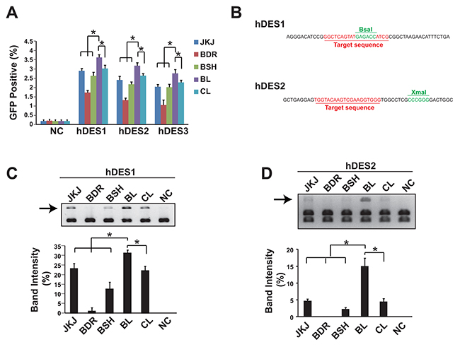 Genome editing efficiency comparison showed pgRNA-BL is the most efficient form of gRNA.