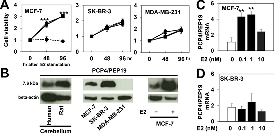 PCP4/PEP19 expression and cell proliferation of human breast cancer cell lines.