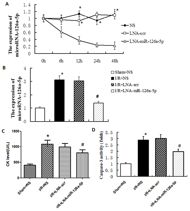 MicroRNA-126a-5p ablation alleviated the myocardial ischemia reperfusion injury in vivo.