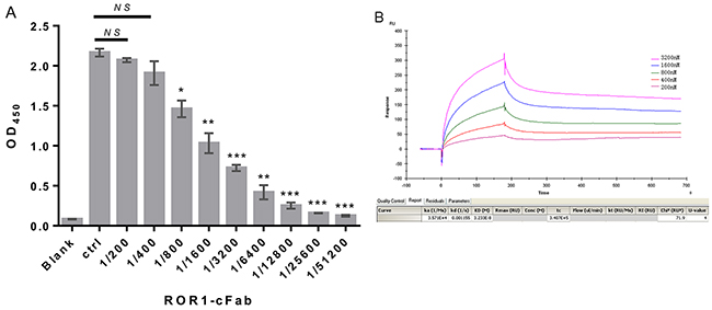 Confirmation of ROR1-cFab specificity and selectivity.