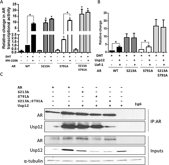 AR Ser213 is required for the upregulation of transcriptional activity by Usp12 and Uaf-1.