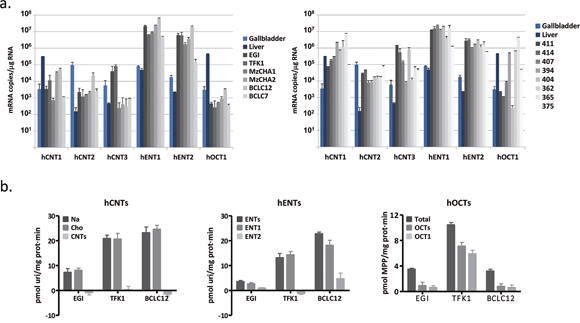 Cholangiocarcinoma drug transporters characterization.
