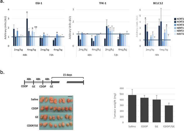 Delayed combination treatment potentiates gemcitabine effect in EGI-1 derived tumors.