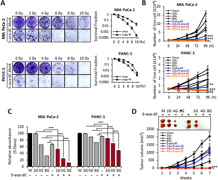 Biological effects of MIA PaCa-2 and PANC-1 cells treated with 5-aza-dC alone and with radiation.