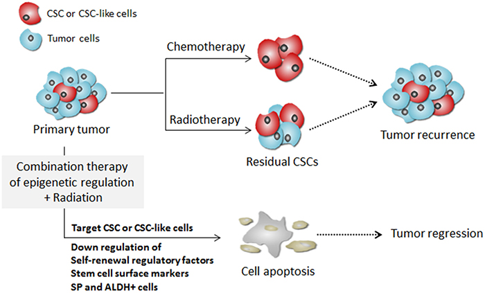 A schematic model illustrating the targeting of CSCs by combination treatment of DNA methylation inhibitor with radiation.