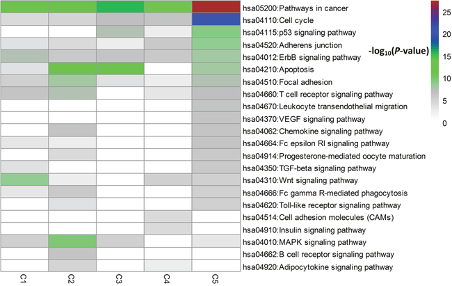 Pathway enrichment analysis for the top 60 driver genes per subtype.