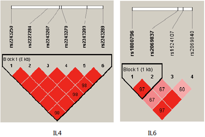 Haplotype block map for the IL4, IL6 SNPs genotyped in this study.