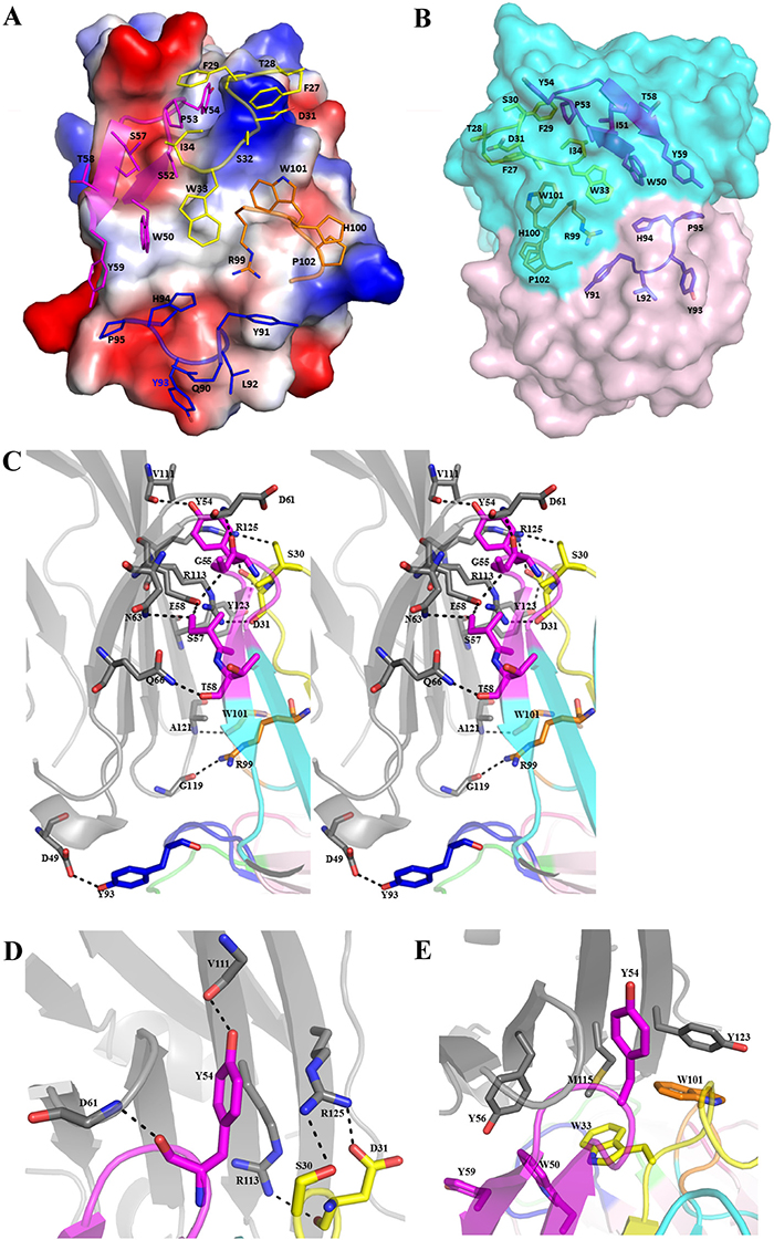 Detailed interactions in the interface of PD-L1/atezolimumab complex.