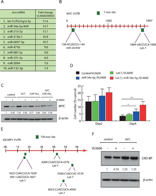 Regulation of MYC at the level miRNAs.