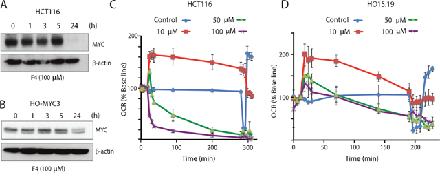The MYC-MAX interaction inhibitor 10058-F4 alters cellular oxygen consumption.