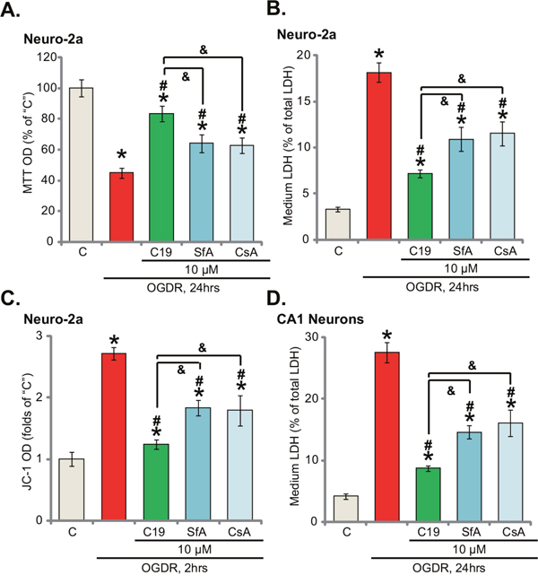 C19 is more efficient than other known Cyp-D inhibitors in protecting neuronal cells from OGD/re-oxygenation.