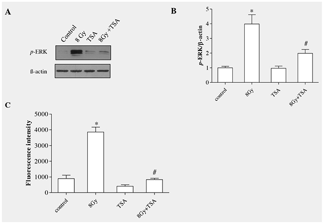 TSA inhibited radiation-induced ERK activation and ROS production in RLE-6TN cells.